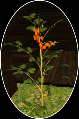 Growing Tomatoes 2.png